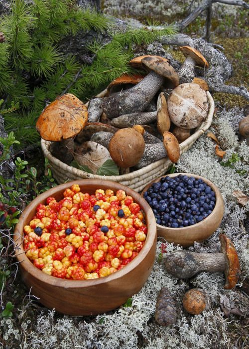 Cloudberries, blueberries and wild mushrooms