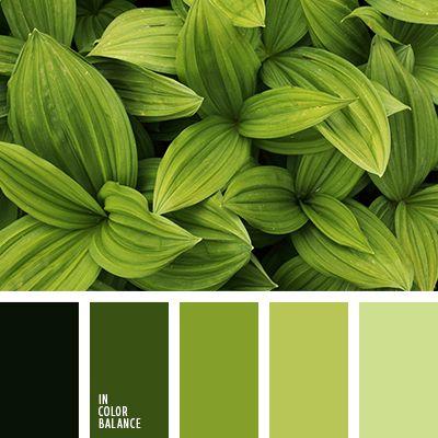 изумрудный цвет, монохромная зеленая цветовая палитра, монохромная цветовая палитра, насыщенный зеленый, оттенки зеленого, подбор цвета, салатовый, салатовый и зеленый, тёмно-зелёный, цвет авокадо, цвет молодой ели, яркие цвета, яркий