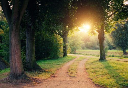 I want to walk this path hand in hand!: Favorite Places, Country Roads, Childhood Memories, Trav'Lin Lights, Secret Places, Sunsets, Beautiful, Driveways, Dirt Roads