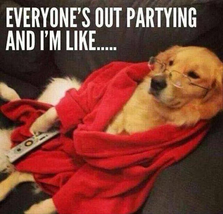 Dog Memes Of The Day 30 Pics – Ep36 #dogs #doglovers #lovelyanimalsworld – Lovely Animals World
