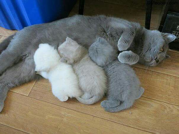 when your kitten printer runs out of ink...