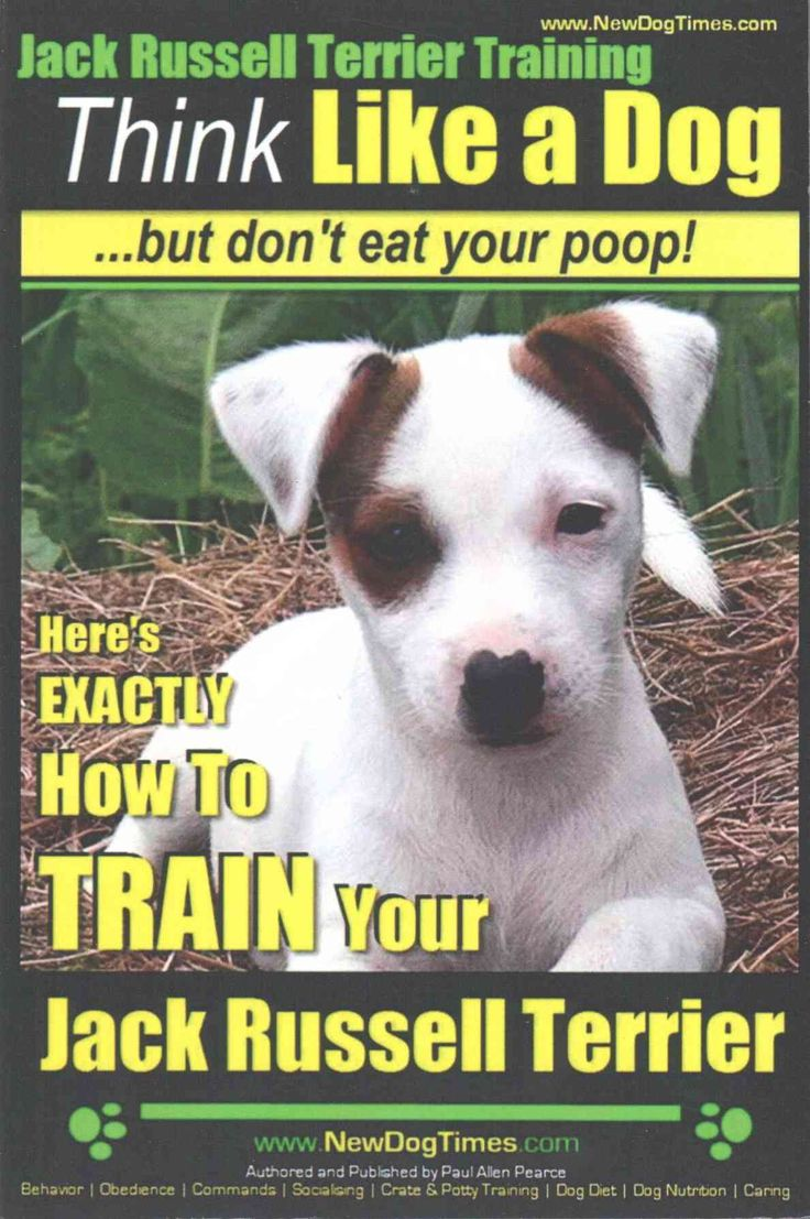 Jack Russell Terrier Training: Here's Exactly How to Train Your Jack Russell Terrier
