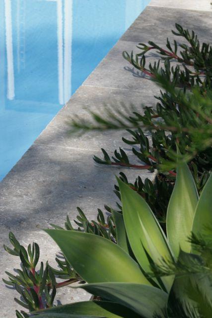 RedBird design: poolside planting