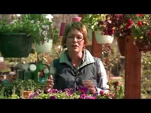 Új cikk: Tavasztól tavaszig, http://kertinfo.hu/tavasztol-tavaszig/, ezekben a témakörökben:  #Borhykertészet #kartbarátmagazin #Kert #kertépítés #kertész #kertészet #kertészetbudapest #KertészetBudapesten #kertészetzugló #kertészetitv-műsor #tavasztóltavaszig, írta: Borhy Kertészet