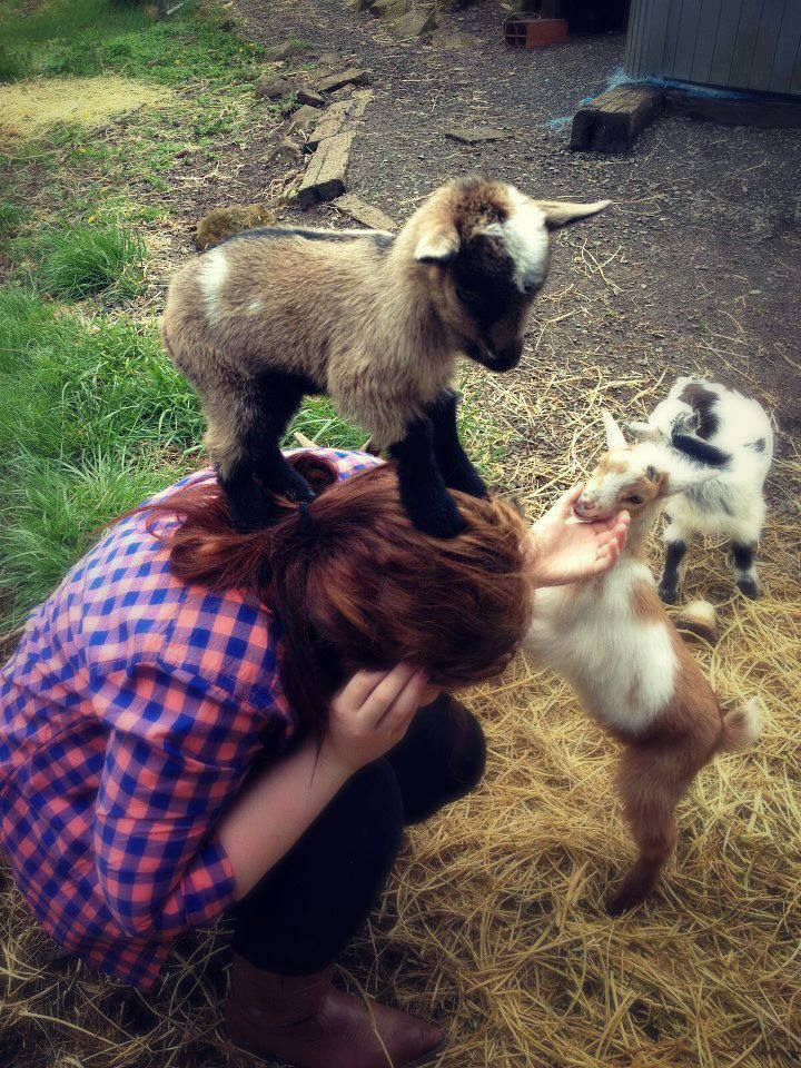 Baby pygmy goats always bring a smile to my face.