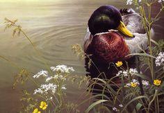 Robert Bateman — Mallard Duck