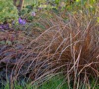 Sweet Garden - Ierburi decorative