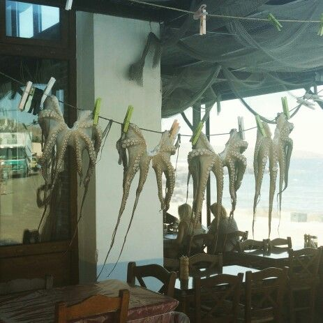 A line of squids, hanging around to get dry in a restaurant in Sigri (Lesvos, Greece)
