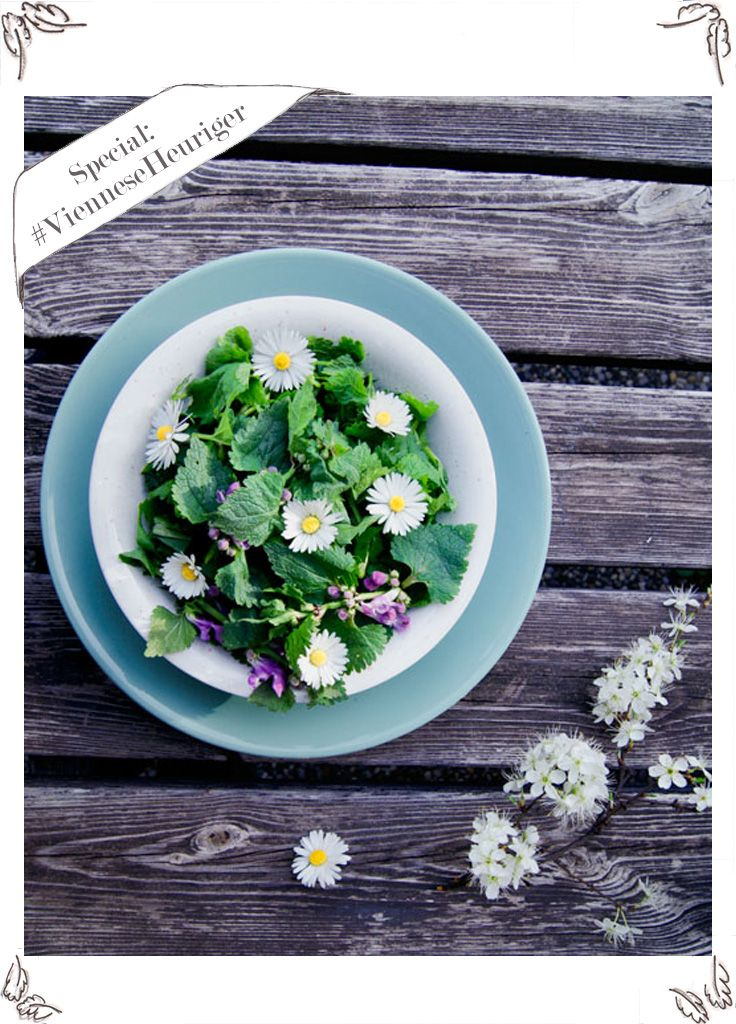 Wild Herbs Salad with stinging nettles, dandelion and daisy flowers