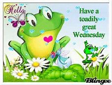 Have a toadily great Wednesday gif
