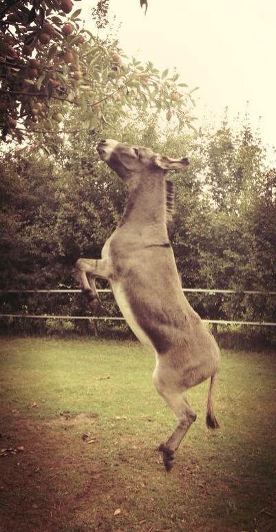 Mara♥️ Bij mijn moment recreatie met ezels in Bocholtz