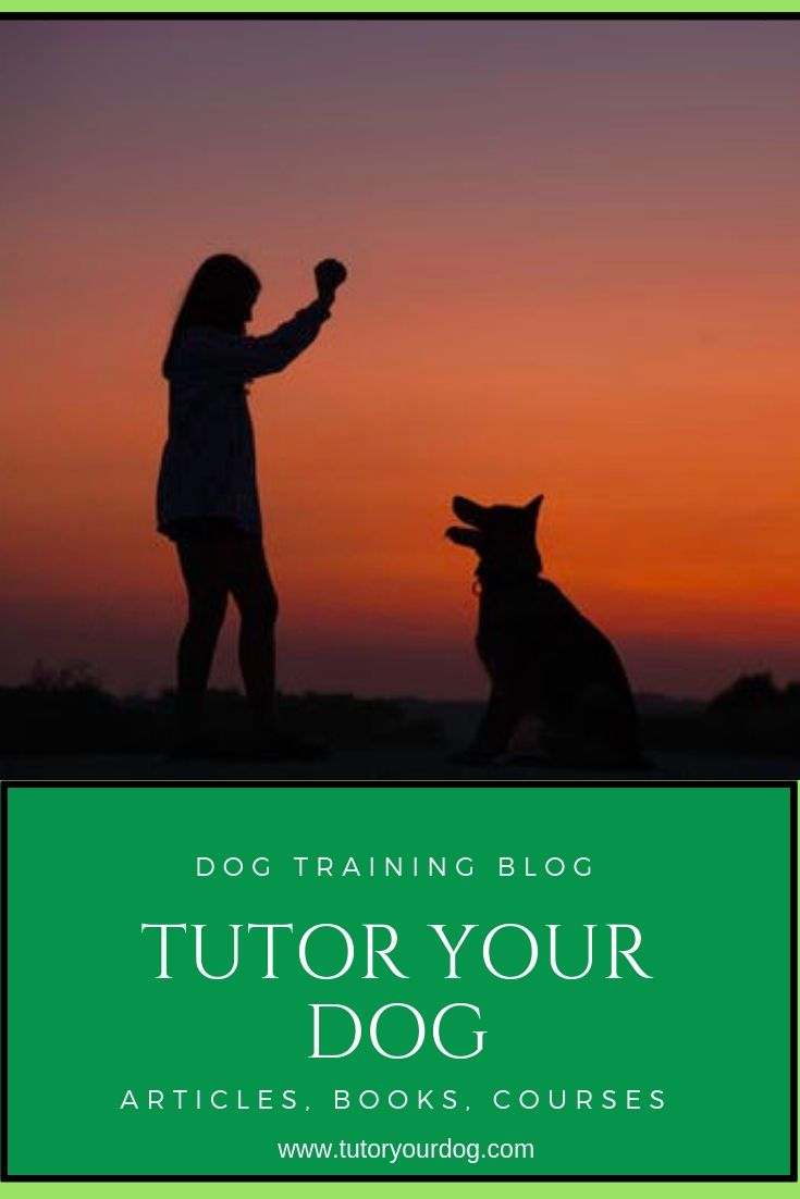 How To Make The Most Of Your Dog Training Time Dog Training