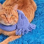 Free Knitting Patterns for Beginners - HowStuffWorks