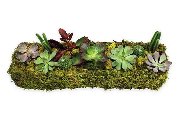 "18"" Succulent Planter, Live on OneKingsLane.com"