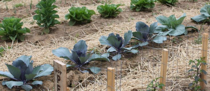 Contrary to popular belief - gardening does not have to be an expensive venture! Especially when using self-sustaining, organic methods that can keep your soil full of life, and your family fed wi...