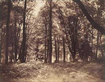 Fontainebleau. Futaie, Gustave Le Gray