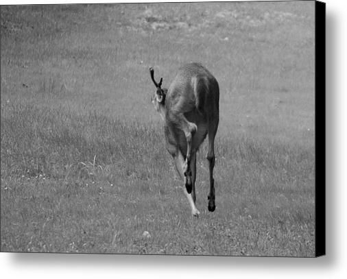 Deer On The Run Canvas Print / Canvas Art By Josh Schwindt - Canvas, Acrylic, Metal and more. Order yours today.