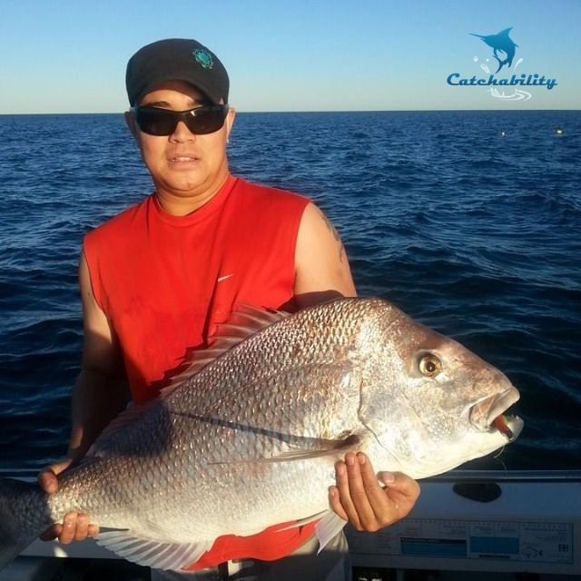 13kg Snapper (pink snapper) caught by Caden near Shoalwater, WA  #Fishing with Catchability