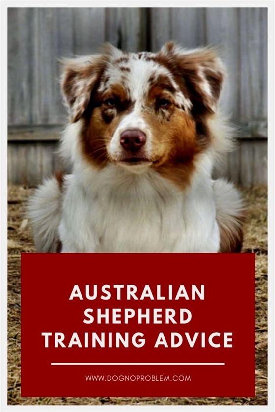 dog training bell, #dog training 101 duet, dog training