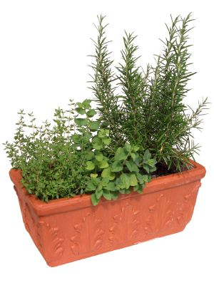 Growing for Profit With Potted Culinary Herbs