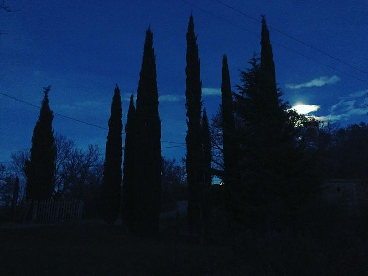 Il giardino di Podere Santa Pia. Insieme ai vigneti e agli uliveti, i cipressi sono l'elemento simbolo del paesaggio toscano.