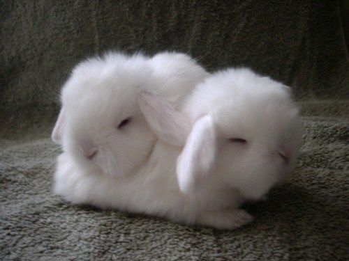 Very cute-bunnies | Too Cute! | Pinterest