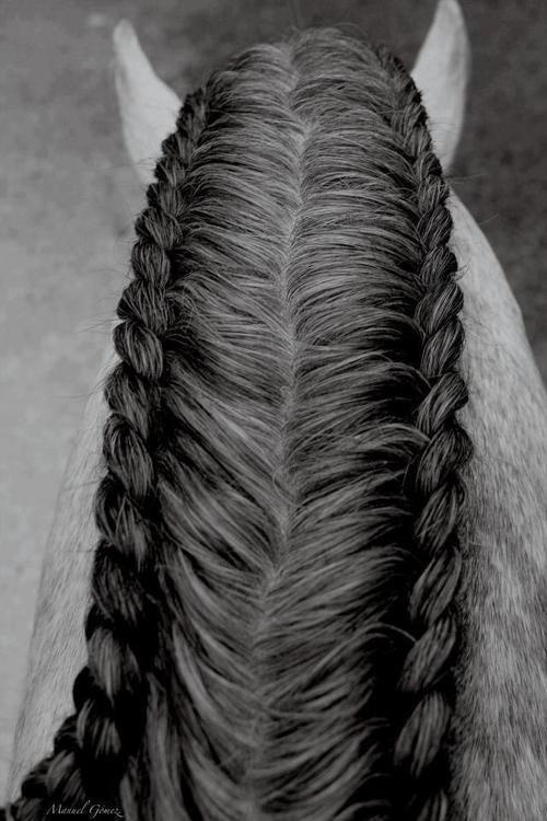 two-sided braided mane Think I posted before, but love it!