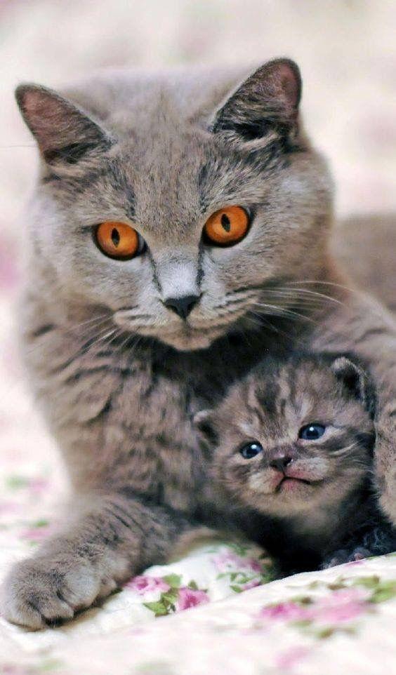 les 154 meilleures images du tableau chats rigolos sur pinterest chatons duveteux animaux. Black Bedroom Furniture Sets. Home Design Ideas