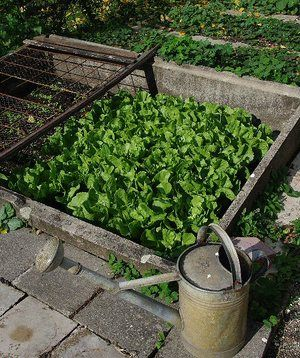 5 mistakes Beginner Gardeners make.
