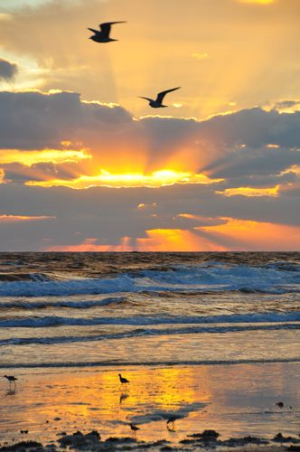 Good Morning Pinners! Hello from Florida- this is Sunrise in Florida eventhou we are being hit with torrential rains right now- © Paul Bates - http://paulbates.com/beautiful-early-morning-beach-sunrise-scenery-pictures-photos/