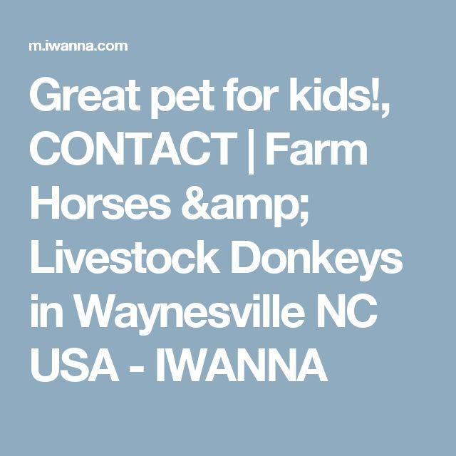 Great pet for kids!, CONTACT   Farm Horses & Livestock Donkeys in Waynesville NC USA - IWANNA