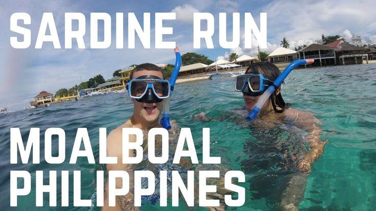 Swimming with the SARDINE RUN MOALBOAL | Cebu, Philippines
