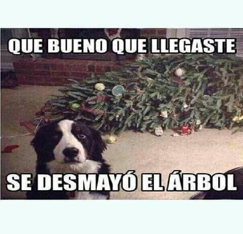 Pin By Jasmin Madison On Memes Christmas Memes Funny Animal Memes Funny Animal Memes