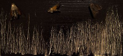 Night - Moths & Oil on wood  www.vasilisangelopoulos.com