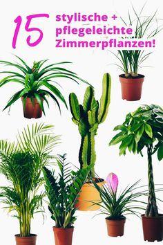 Der Pflanzen Guide 15 Stylische Und Pflegeleichte Zimmerpflanzen