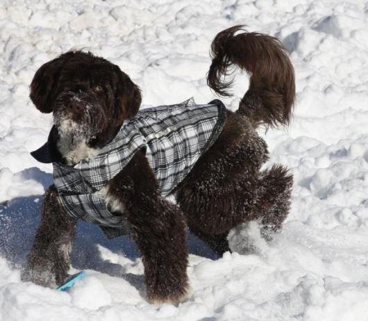 Trotting along in her Snow Seeker coat