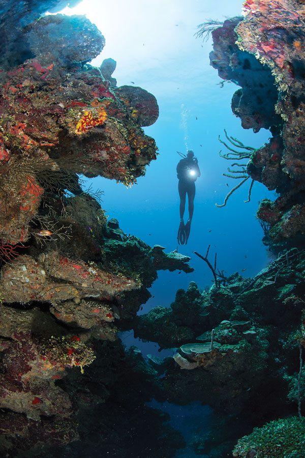 26 best diving in roatan images on pinterest diving snorkeling and scuba diving - Roatan dive sites ...