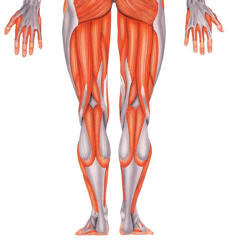 Mejores 85 imágenes de Músculo y huesos en Pinterest | Huesos, El ...