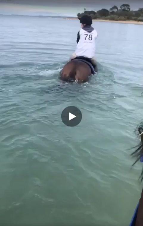 Was für eine surreale Erfahrung für die Pferde! Sehr süß
