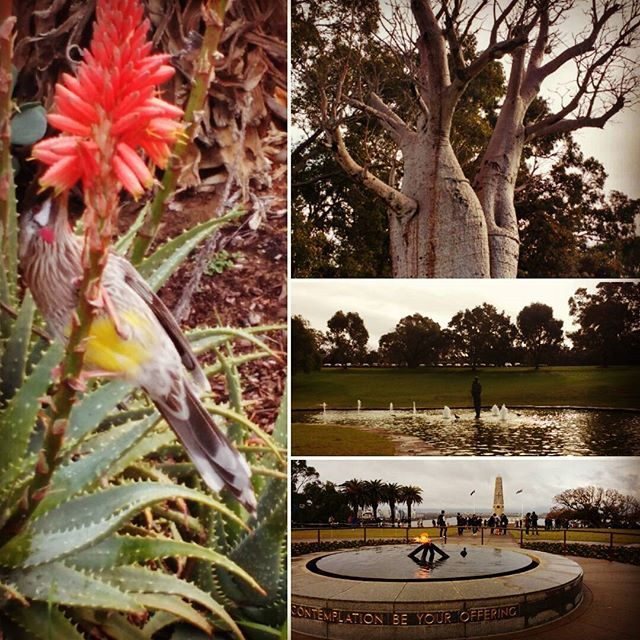 Winter at Kings park