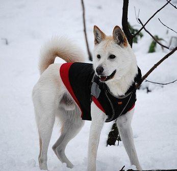 Pungsan Dog Rescue