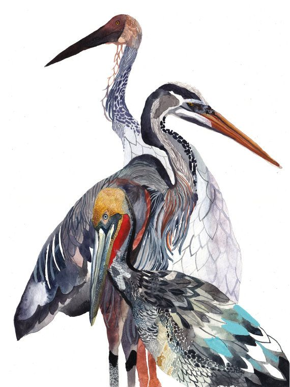 Pelican, Heron and Crane, archival print of the artist, Michelle's, original watercolor painting, 8 x 10. $20