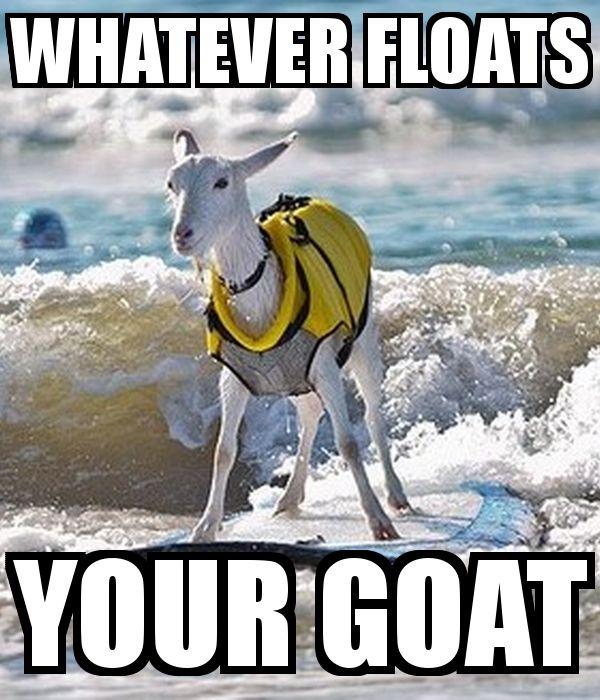 Funny Meme Whatever : Best meme funny images on pinterest design