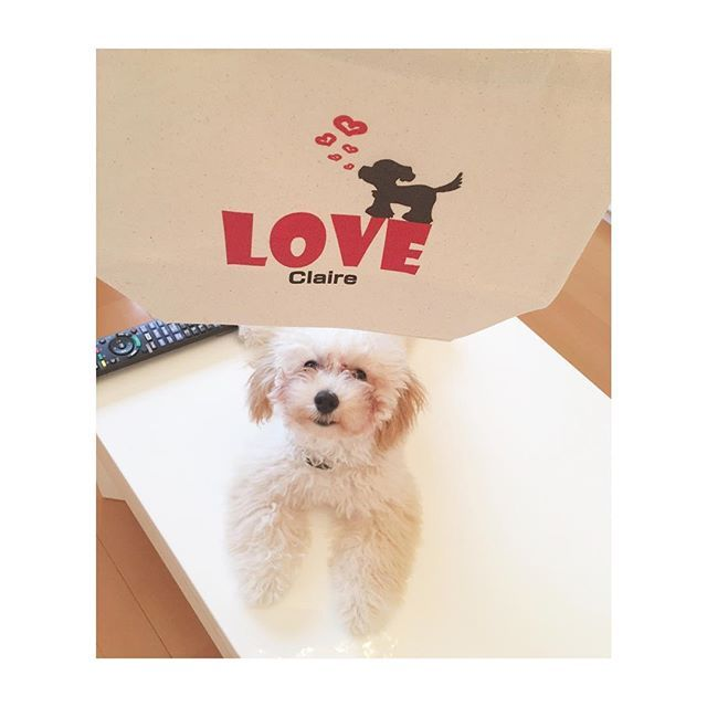 名入りのお散歩バック🐶👜 #トイプードル #お散歩バック #生後5ヶ月 #アプリコット #ふわもこ #愛犬 #クレア #犬との暮らし #わんこ #タイニーサイズ #toypoodle #tinypoodle #dogstagram #love #cute #dog #angel #doglife #followme #puppy