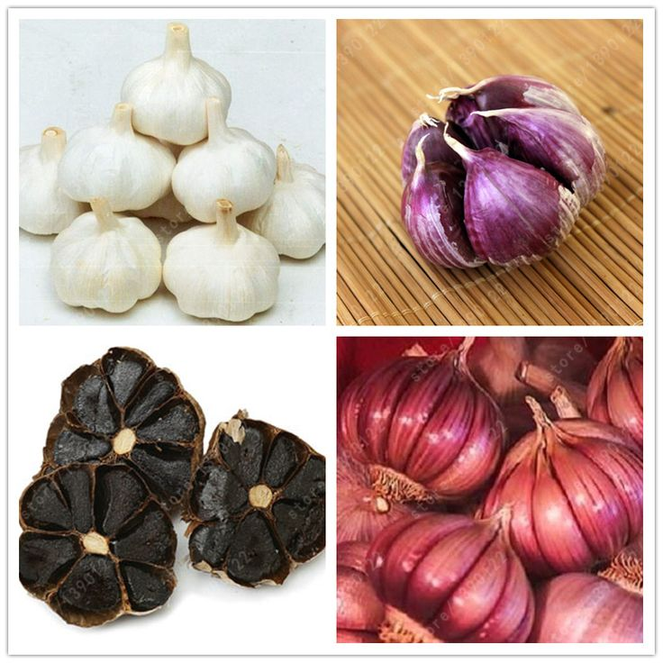 100 шт./пакет multi-лепестки чеснок семена Органические семена овощей Кухня приправы пищи бонсай или горшок растений для дома сад