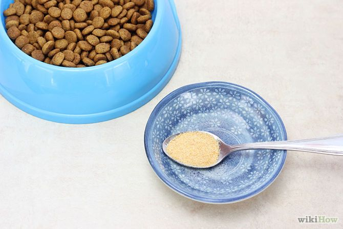 STop your cats diarrhea
