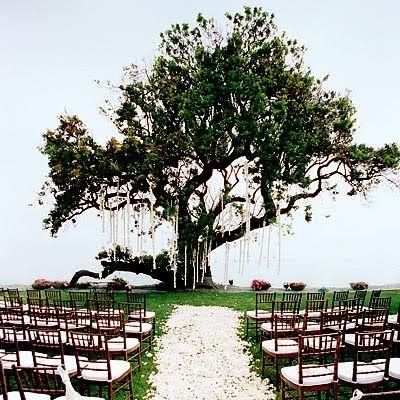 Love the tree!!!: Dreams, Stuff, Wedding Ideas, Future, Beautiful, Outside Wedding, Big Trees, Outdoor Weddings, Wedding Ceremony