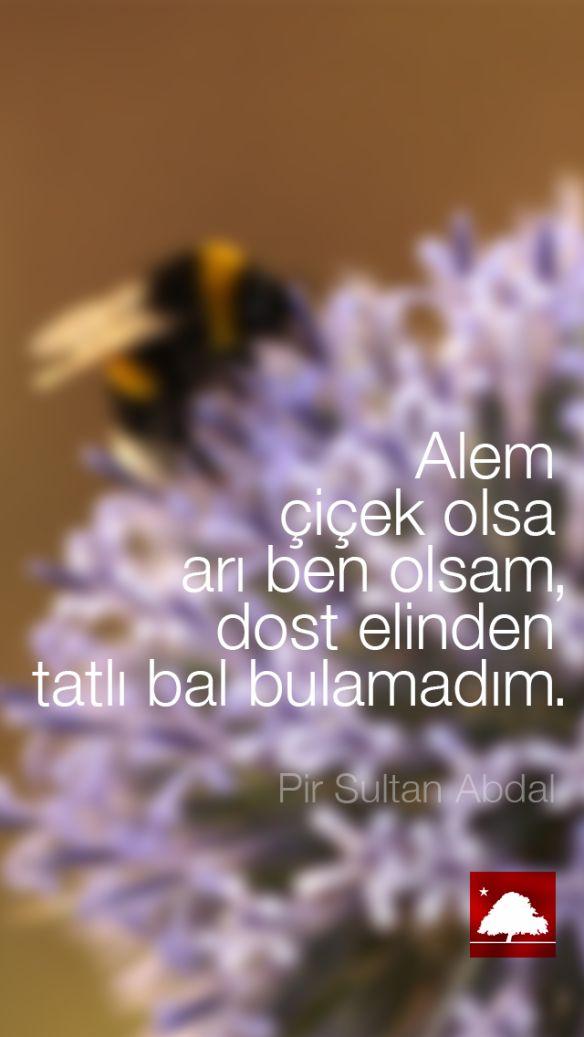 Pir Sultan Abdal : Alem çiçek olsa arı ben olsam, dost elinden tatlı bal bulamadım. Anadolu Çınarları poster