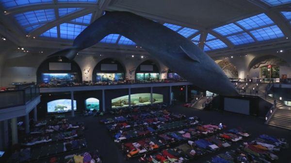 American Museum Of Natural History Sleepover Reviews