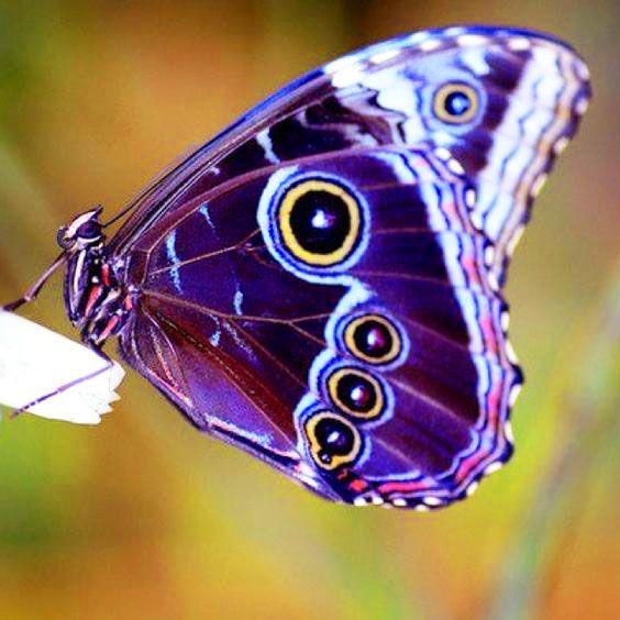 Purple Beauty <3